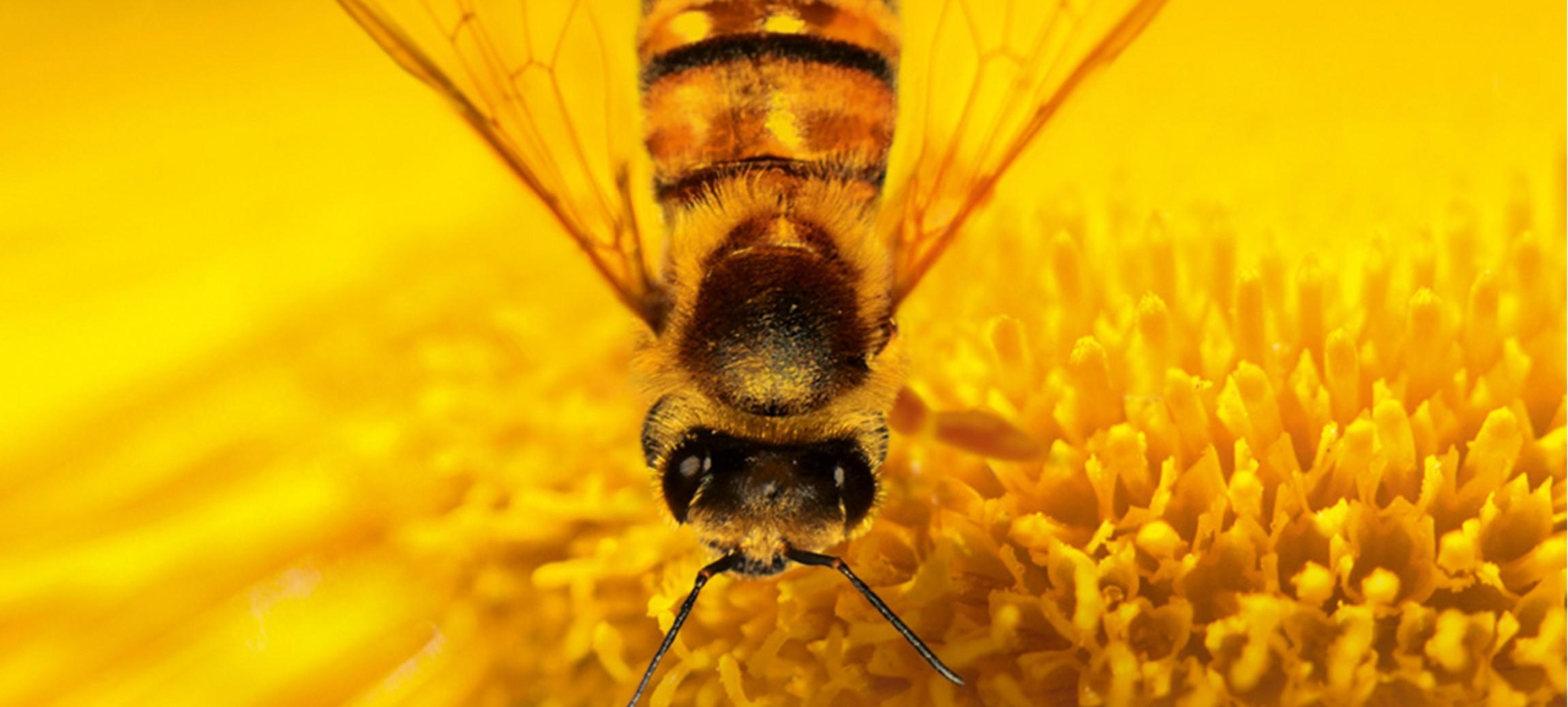 More Than Honey
